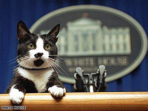 socks_whitehouse.jpg